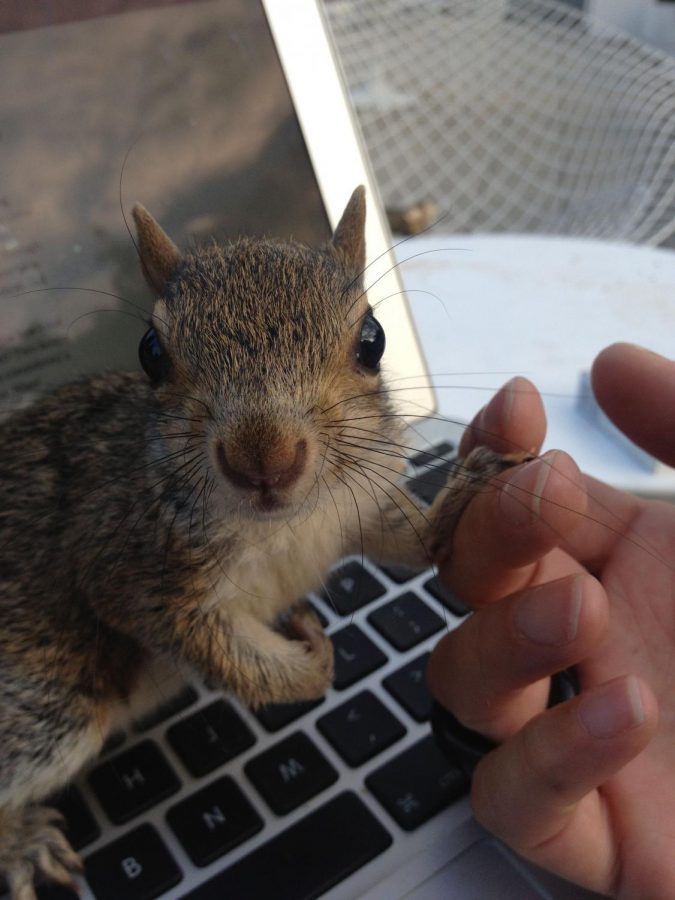 The+Store+Squirrel